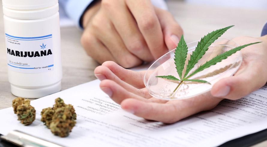 Avanços na Saúde: Marta Suplicy propõe discussão sobre descriminalização do plantio da cannabis sativa para fins medicinais e consegue aprovação da CAS