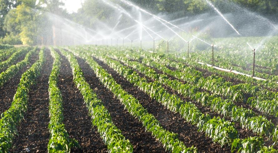 Água: atividades socioeconômicas, como a irrigação do campo, também contribuem – e muito – para o gasto indiscriminado do líquido essencial à vida