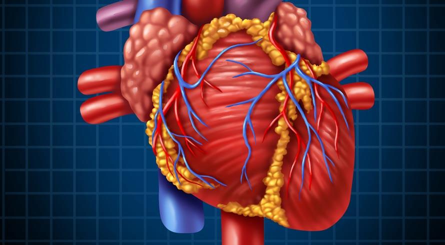 Coração: mitos espalhados por aí podem prejudicar a saúde do órgão