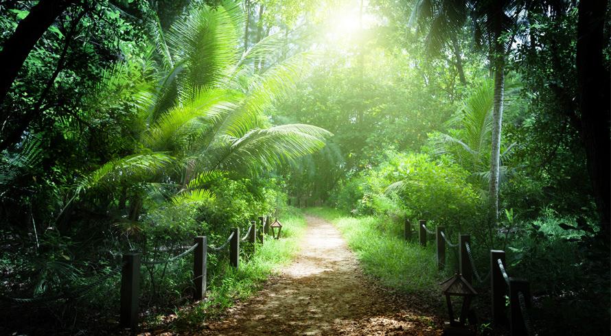 Dia de celebrarmos a Natureza!