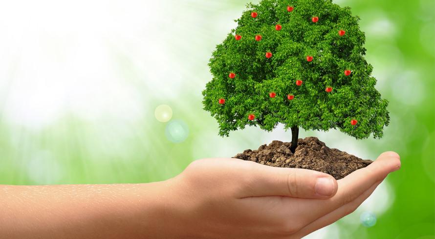 Dia de refletirmos, com maior ênfase, a respeito das questões que envolvem o Meio Ambiente