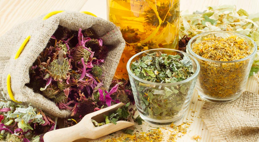 Farmacinha de ervas: são muitas as que você pode cultivar em casa para cuidar bem da sua saúde