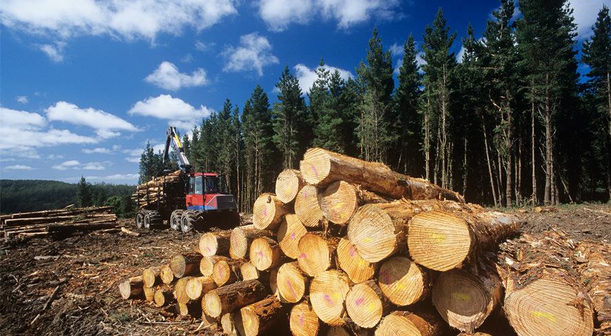 Ibama dispõe de novo aliado para prevenir / estagnar o desmatamento na Amazônia