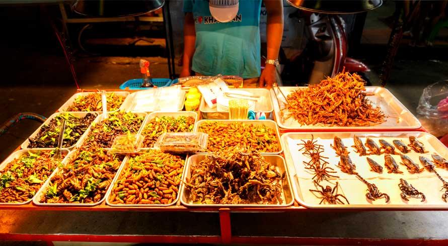 Insetos comestíveis: você incluiria na alimentação cotidiana?
