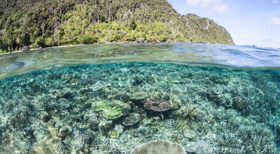 Julio Verne não foi tão fictício assim! Pesquisa revela que, abaixo de nossos pés, vive um ecossistema com quase o dobro da área dos oceanos que conhecemos