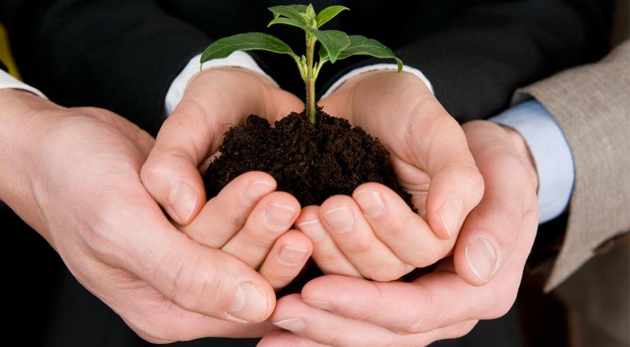 Uma data muito especial para o meio ambiente, dia de voltar atenções para a proteção das florestas