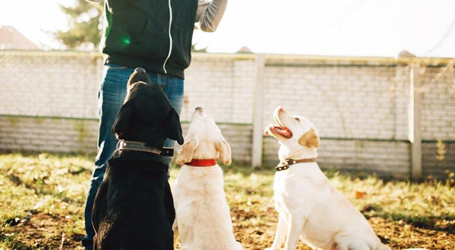 Na Alemanha cachorros são treinados para farejar Sars-CoV-2