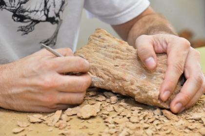 Pesquisadores da UNB estudam  fóssil de dinossauro