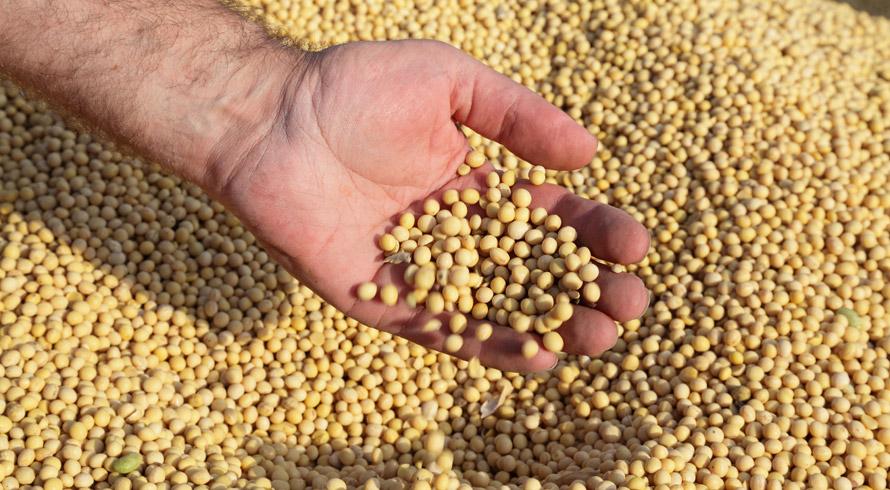 O Brasil precisou de ajuda para se tornar um dos maiores produtores de soja