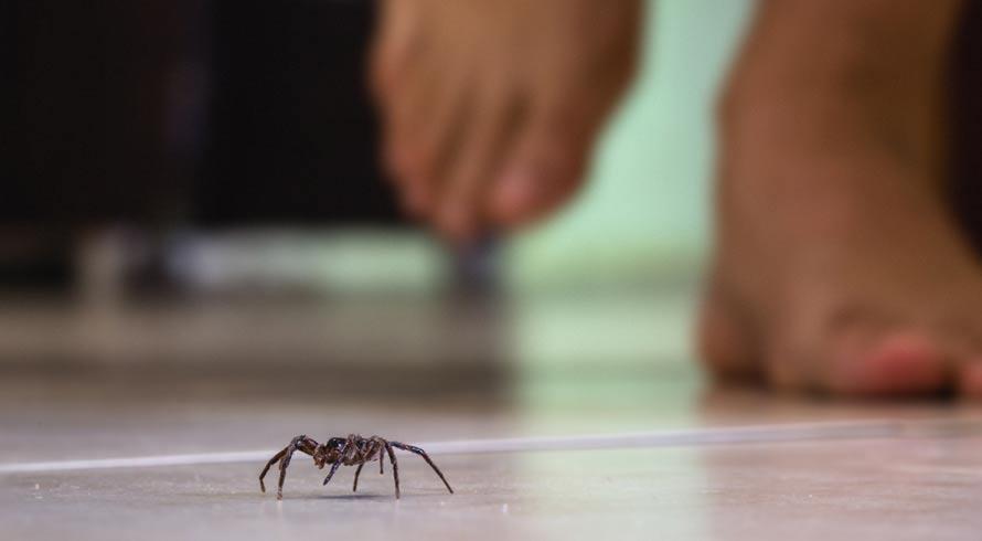 Aranhas em casa: saiba por que não deve matá-las