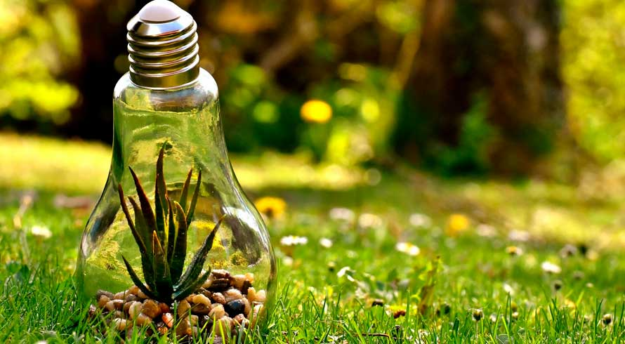 Celebremos o Dia Mundial do Meio Ambiente!