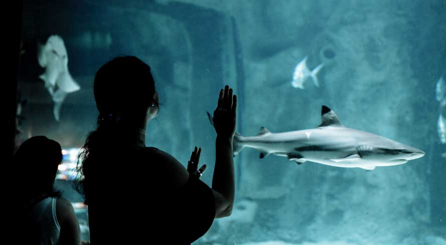 Vida marinha pode ser contemplada em museu subaquático, no Chipre
