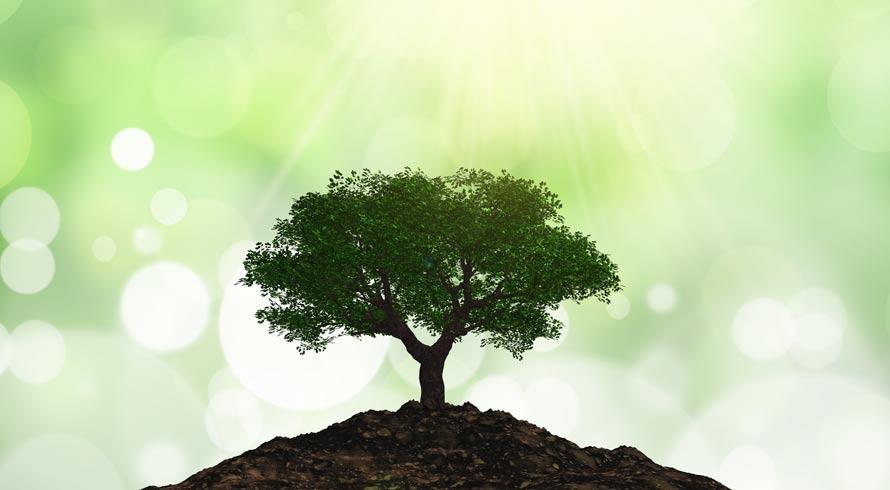 Semana Mundial do Meio Ambiente: vamos falar sobre sustentabilidade?