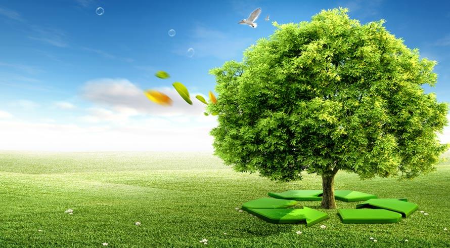 Dia da Ecologia: uma data importante para falarmos sobre o futuro do planeta