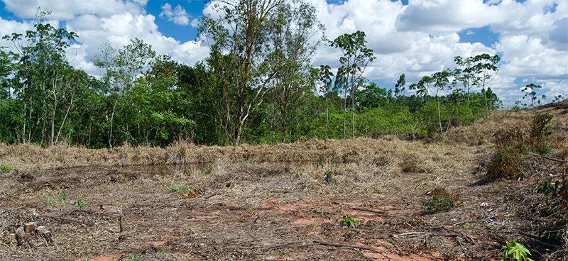 Mapeamento recente do IBGE traz dados preocupantes: em um espaço de 14 anos, Brasil viu sumir 9,5% de sua cobertura vegetal