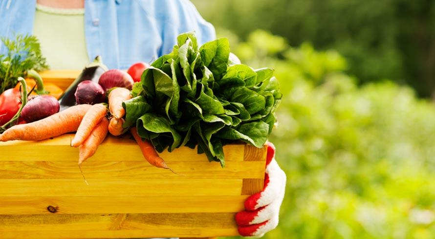 O dilema da comida: a produção dela causa desequilíbrio na natureza e, no futuro, poderá dificultar a permanência humana no planeta