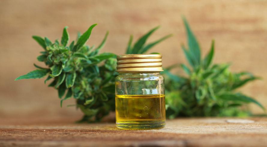 Óleo de Cannabis liberado na Austrália! As vendas do produto – produzido a partir do extrato de cannabis – já começaram na maior rede de farmácias do país