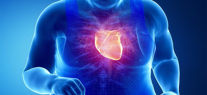 Pesquisadores britânicos alertam: magros também podem apresentar doenças cardiovasculares. Peso não deve ser o único indicador de alerta