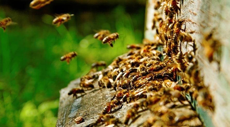 """Produtores já contam com a tecnologia para ajudar no rendimento das plantações: é o """"Uber das abelhas"""""""